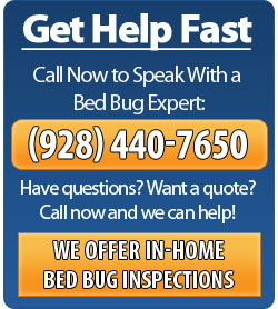 Call Phoenix Bed Bug Expert - (928) 440-7650