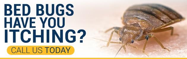 Phoenix Bed Bug Expert   623 552 4815